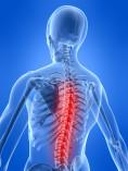 Spine Module